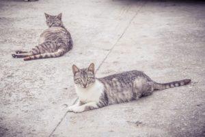 Katzen auf Faserzementplatten