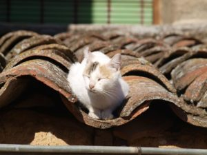 Katze auf Mönch-Nonnen-Dach