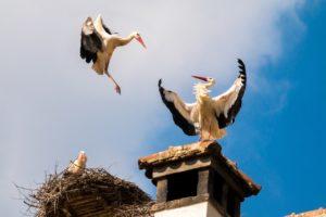 Nest und Störche auf Schornsteinkopf