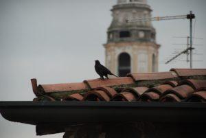 Vogel auf Traufe und Dachrinne